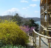 Forsythia and red buds in full bloom adorn the entrance to the lower lake view suite with the upper two stories to the right and the view of Beaver Lake in the background.